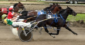 Horse races April 2016 photo