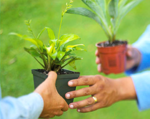 plant-exchange Google image